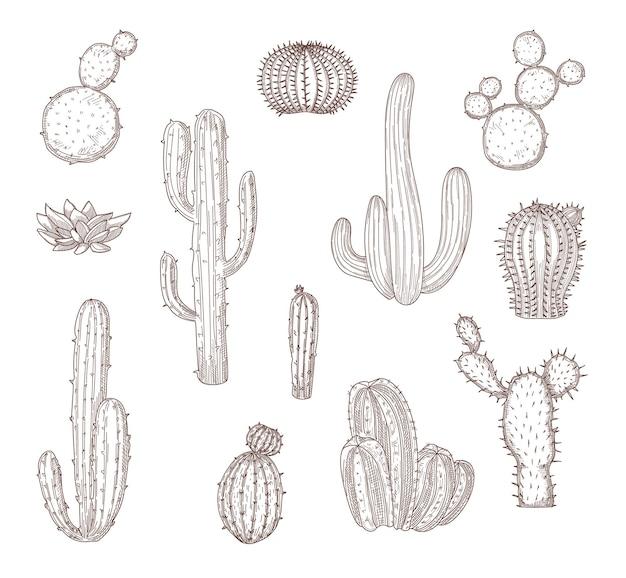 Conjunto de cactos desenhados à mão diferente. ilustração gráfica plana monocromática.