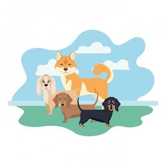 Conjunto de cães adoráveis em branco
