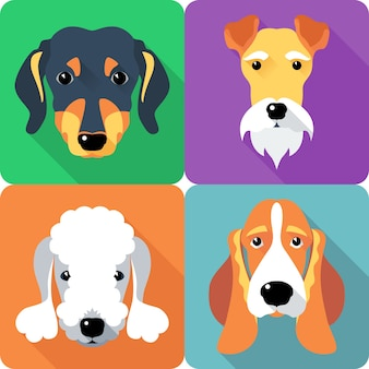 Conjunto de cães fox terrier dachshund ícone design plano