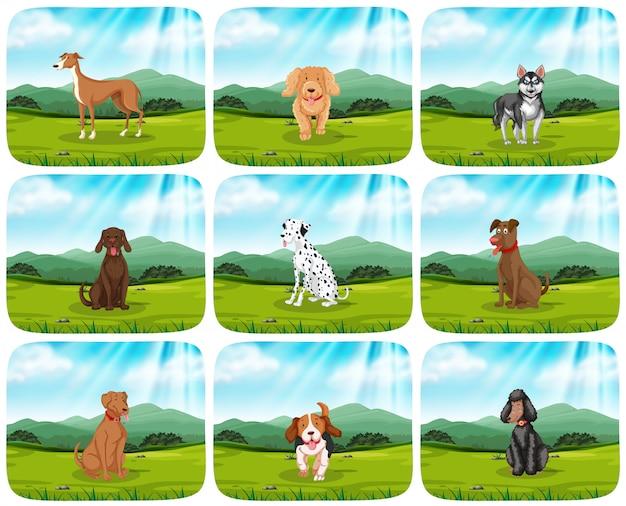 Conjunto de cães na cena do parque