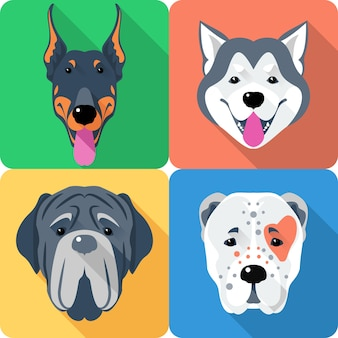 Conjunto de cães pastor da ásia central, doberman, malamute do alasca e mastino, ícone da raça design de cabeça chata