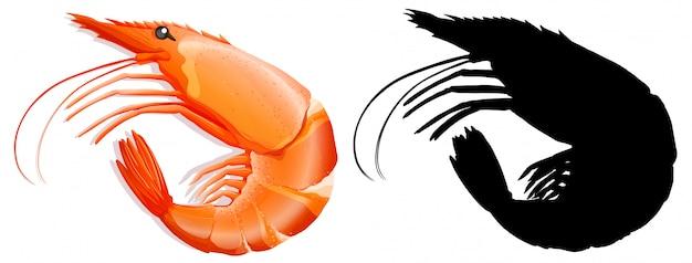 Conjunto de camarão no fundo branco