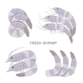 Conjunto de camarões frescos ou camarão isolado em um fundo branco. ilustração dos desenhos animados