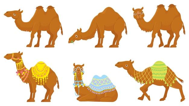 Conjunto de camelos. animais selvagens e domesticados em caravanas do deserto com sela