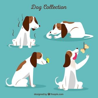 Conjunto de cão em quatro situações diferentes