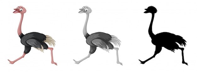 Conjunto de caracteres de avestruz