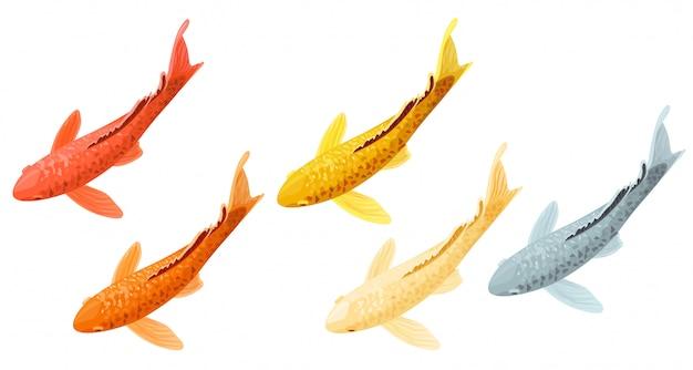 Conjunto de carpas peixes koi dos desenhos animados.