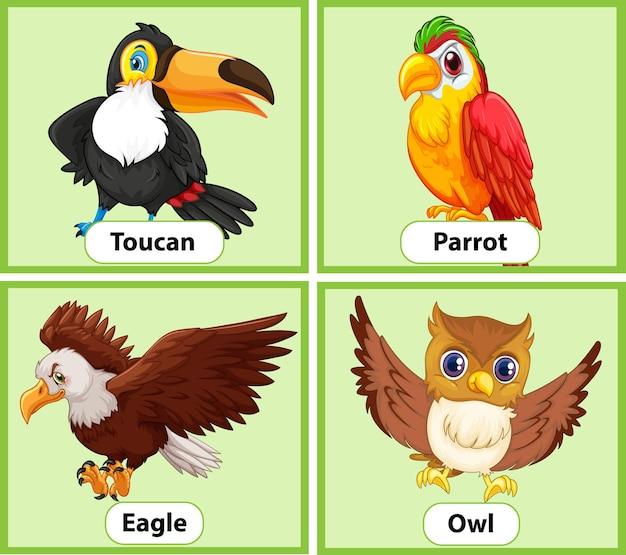 Conjunto de cartões educacionais de pássaros com palavras em inglês