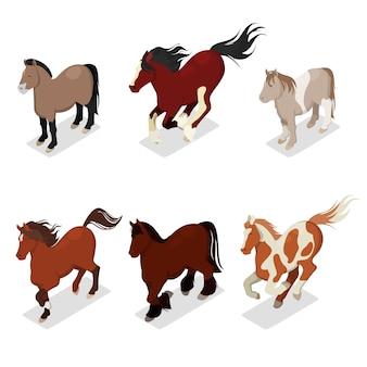 Conjunto de cavalos de raças diferentes