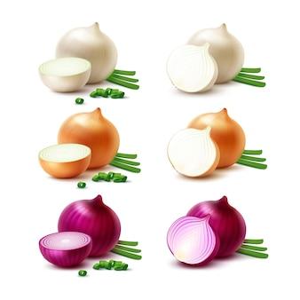 Conjunto de cebolas frescas e fatiadas, isoladas no branco