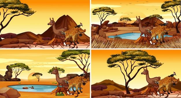 Conjunto de cenas com animais no deserto