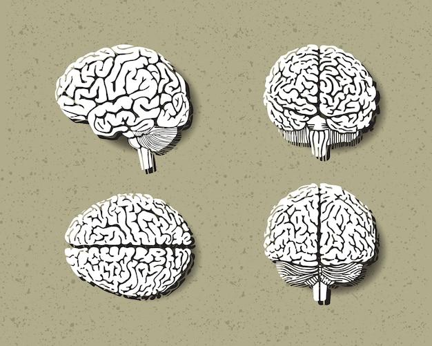 Conjunto de cérebro humano.
