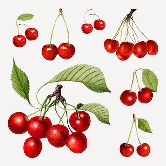 Conjunto de cereja vermelha fresca desenhada à mão