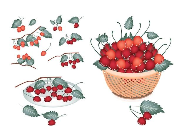 Conjunto de cerejas vermelhas no fundo branco