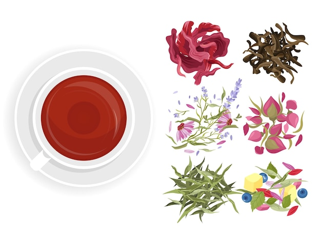 Conjunto de chá de ervas. menu de café de bebidas de ervas de plantas naturais, flores, frutas e bagas.