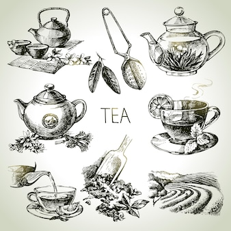 Conjunto de chá de vetor de esboço desenhado à mão