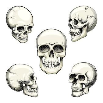 Conjunto de cinco visualizações em escala de cinza diferentes de um crânio humano naturalista com ilustração vetorial de dentes isolada no branco