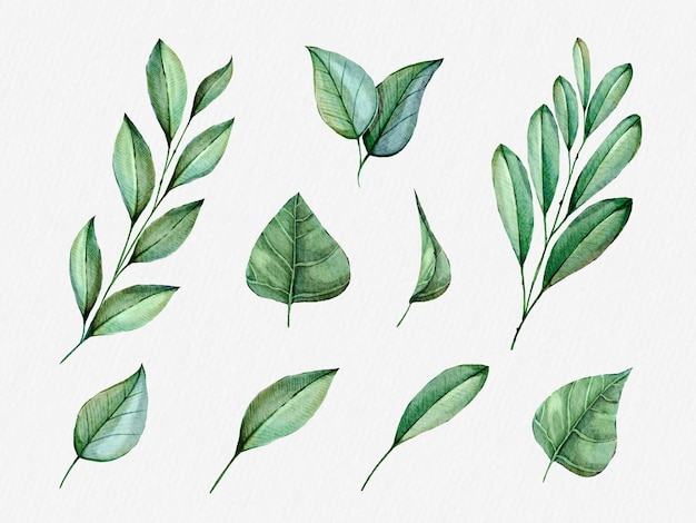 Conjunto de clipart de folhas tropicais verdes.