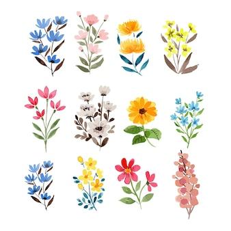 Conjunto de clipart de ilustração de vários elementos coloridos de aquarela com flores silvestres