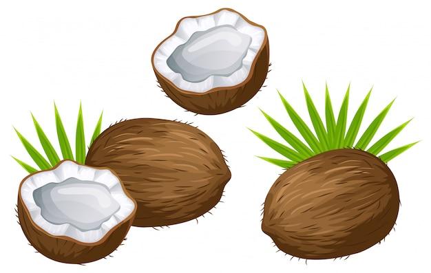Conjunto de coco, leite e folhas.