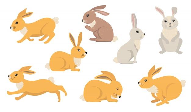 Conjunto de coelhos de desenho animado