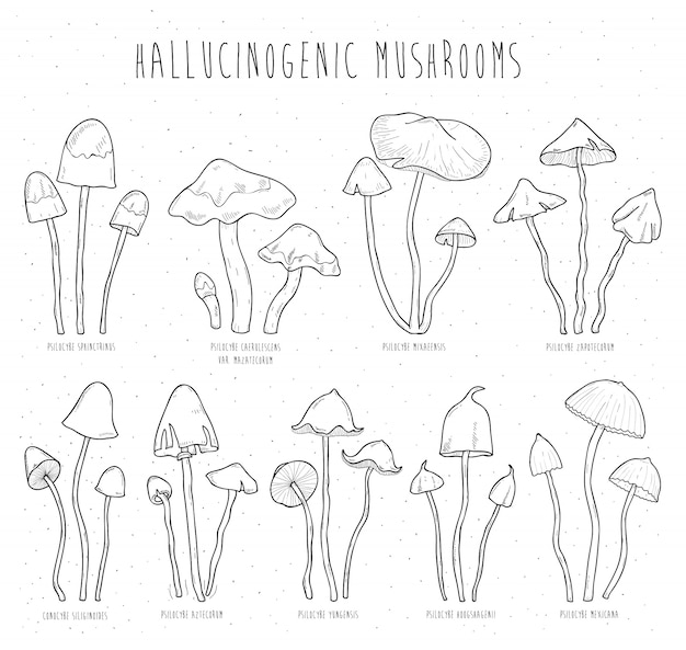 Conjunto de cogumelos alucinógenos.