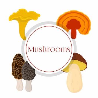 Conjunto de cogumelos - bolete, reishi, chanterelle, morel