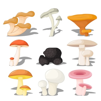 Conjunto de cogumelos comestíveis com sombra, tridimensional em fundo branco
