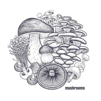Conjunto de cogumelos comestíveis.
