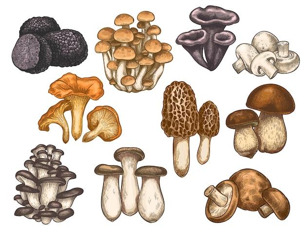 Conjunto de cogumelos desenhados à mão