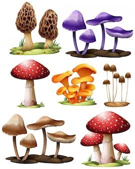 Conjunto de cogumelos diferentes