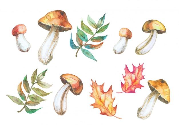 Conjunto de cogumelos em aquarela e folhas de outono.