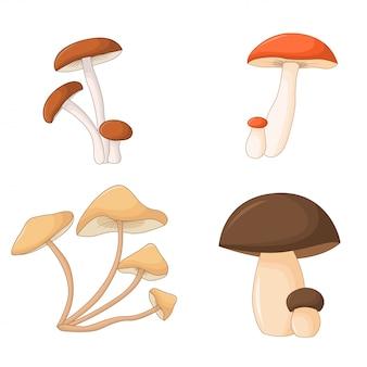 Conjunto de cogumelos isolados