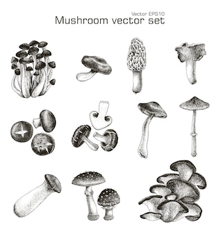 Conjunto de cogumelos mão desenho