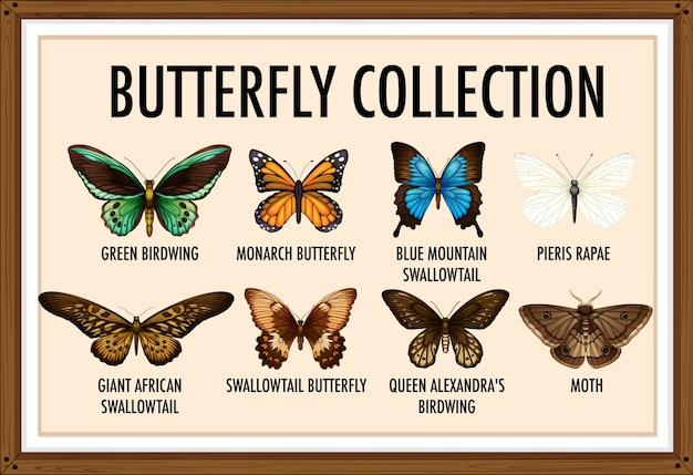 Conjunto de coleção de borboletas