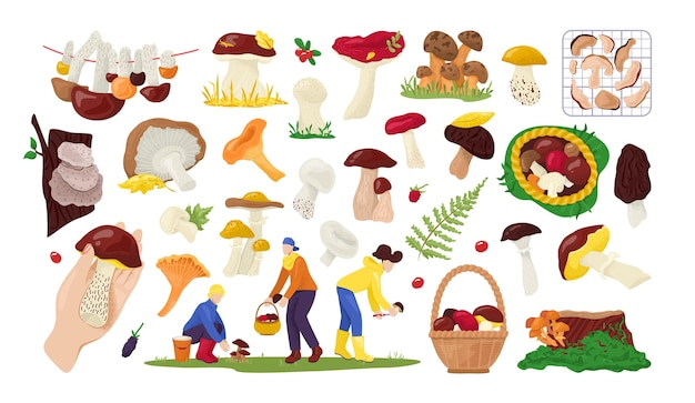 Conjunto de coleção de cogumelos comestíveis na natureza, para comida na ilustração em branco. coletores de cogumelos de outono na floresta.