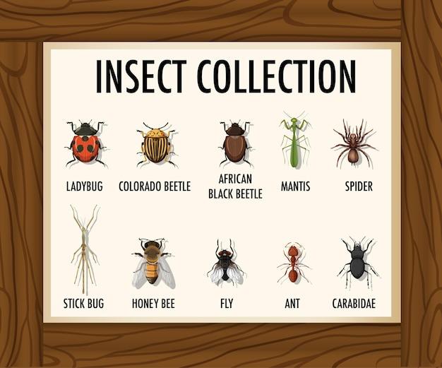 Conjunto de coleção de insetos na mesa de madeira