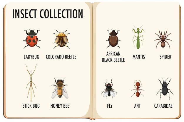 Conjunto de coleção de insetos no livro