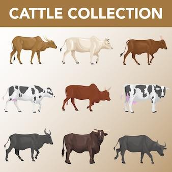 Conjunto de coleção de raças de gado