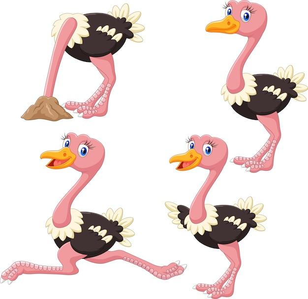 Conjunto de coleta de avestruz engraçado dos desenhos animados