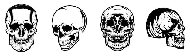 Conjunto de coleta de crânios