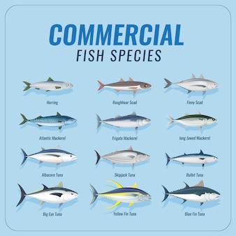 Conjunto de coleta de espécies de peixes comerciais