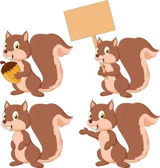 Conjunto de coleta de esquilo de caixa bonito