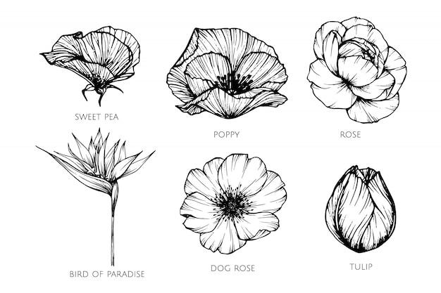 Conjunto de coleta de ilustração de desenho de flor.