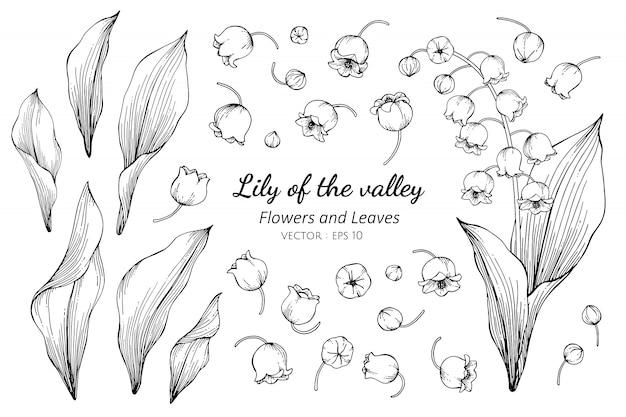Conjunto de coleta de lírio do vale flor um