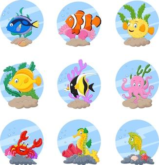 Conjunto de coleta de peixes de recife tropical
