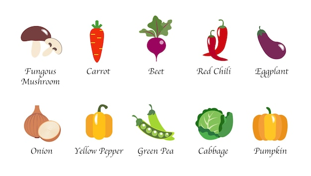 Conjunto de coleta isolado de alimentos vegetais saudáveis e orgânicos