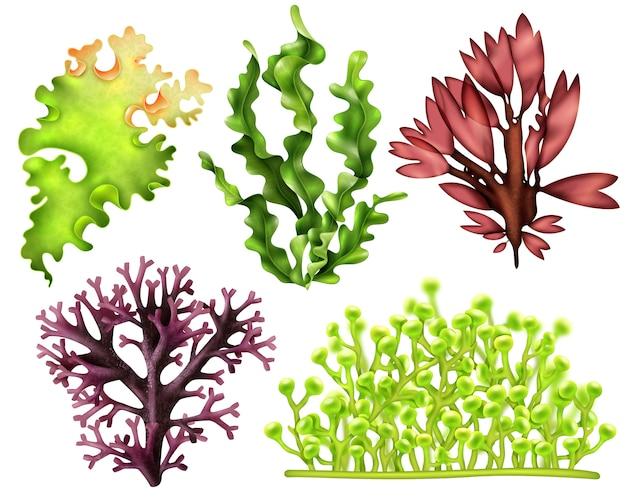 Conjunto de comida realista de ervas daninhas do mar