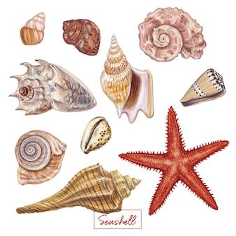Conjunto de conchas de mão desenhada