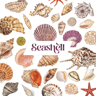 Conjunto de conchas desenhadas à mão